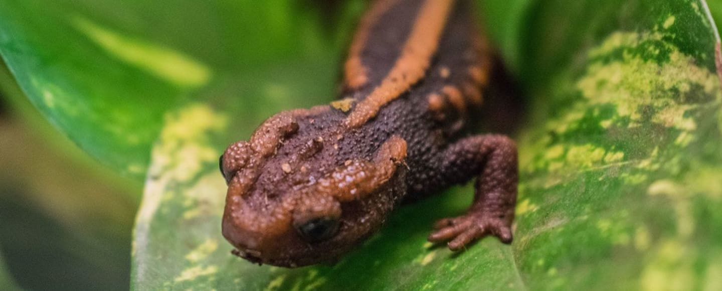 National Reptile Zoo | Ballyhoura Science Week 2020